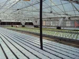 Greenhouse Appraisal Denver Colorado Appraisal Consultants
